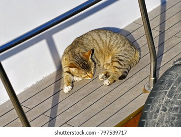 cat sleeping on the deck of a ship