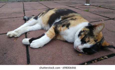 A cat sleeping on the footpath.