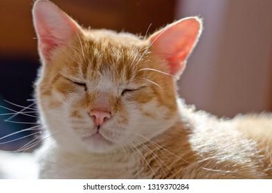 Cat sleeping on the mattress