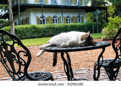 Cat sleeping on a patio table