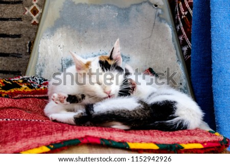 Cat Sleeping On Rugs Medina Located Stock Photo Edit Now