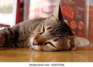 Cat is sleeping on the table