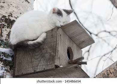 Cat sleeping on the top of a birdhouse