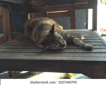 Cat sleeping on wood chair with sunlights
