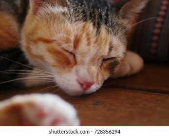 Cat sleeping on wooden floor .