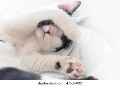 cat sleeping with paw cover its face on white blanket, soft focus photo