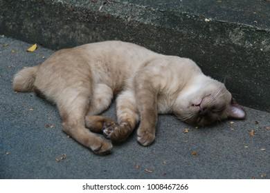 Cat sleeping peacefully at a park