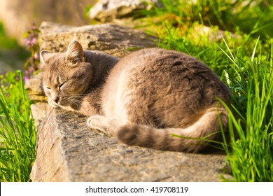 Cat sleeping peacefully in the sun on a stone in the garden viewed from its tail with focus on the head