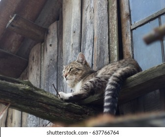cat is sleeping. the roof of the old barn