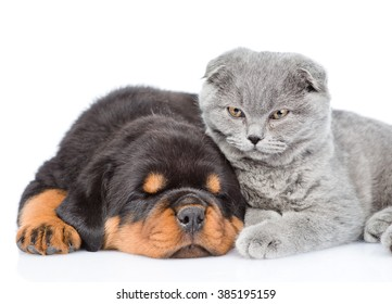 Cat and sleeping rottweiler puppy lying together. Isolated on white background