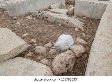 Cat sleeping at Tarxien temple complex - Megalithic Temple. Malta. 8 March, 2018