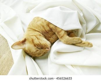 cat sleeping under white blanket