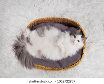 cat sleeps in the basket