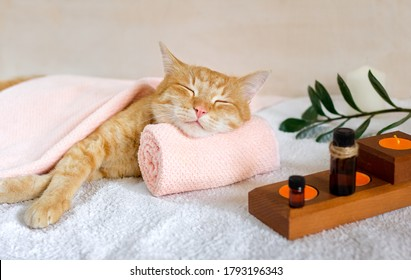 A cat sleeps resting his head on a towel on a massage table while taking spa treatments, massage oil, relax