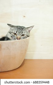 The cat sleeps in a wooden bowl