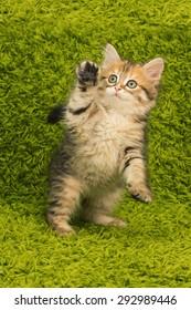 cat, small