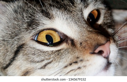 The cat is a small carnivorous mammal. It is the only domesticated species in the family Felidae and often referred to as the domestic cat to distinguish it from wild members of the family.
