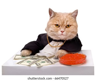 Cat in smart clothes with the money and red caviar on a white background.