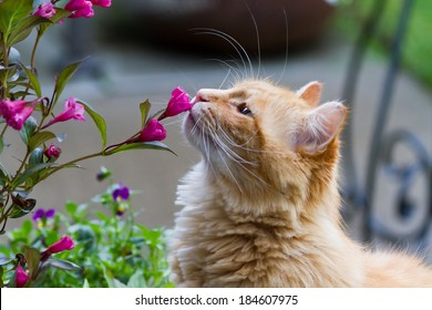 Cat smelling flowers