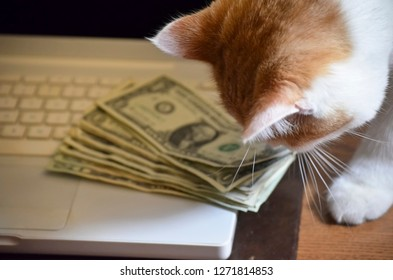 Cat Smelling Stack of Money on Computer