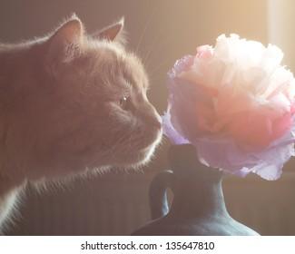 Cat Smelling Tissue Paper Flower