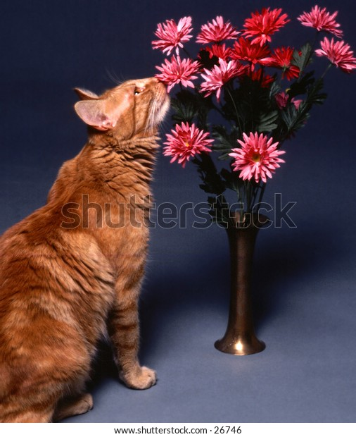 Cat smelling a vase of flowers