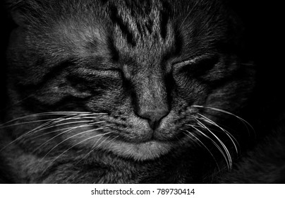 cat smile with closed eyes, close-up, black & white