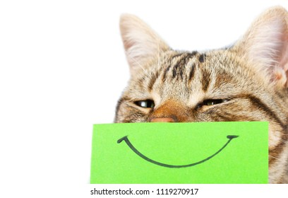 Cat with a smile painted on a cardboard