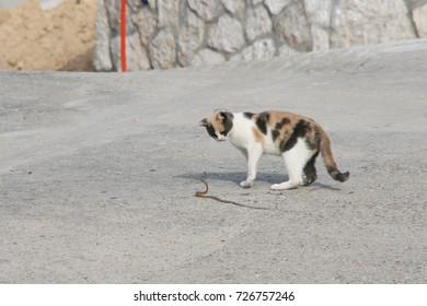 Cat & Snake