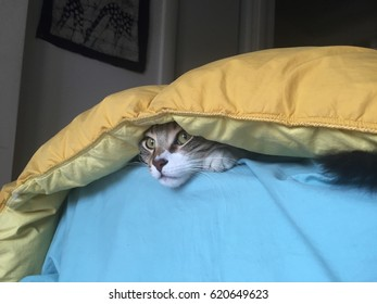 Cat sneaks out of blankets