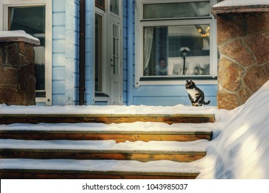 Cat sniffing snowy patio in winter. Cat flap on background