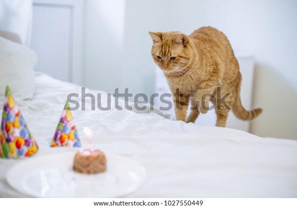 Groovy Cat Sniffs Cake Cat Food Birthday Stock Photo Edit Now 1027550449 Funny Birthday Cards Online Hetedamsfinfo