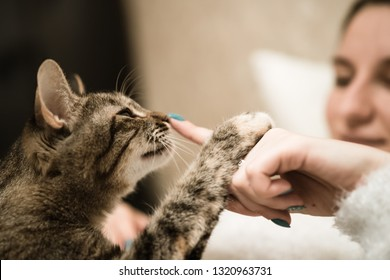 The cat sniffs the finger of its mistress