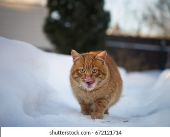 Cat in the snow. Snowflakes on the face.