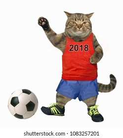 The cat soccer player with a ball. White background.