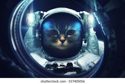 Cat at spacewalk. Cosmic art, science fiction wallpaper. Beauty of deep space. Billions of galaxies in the universe. Elements of this image furnished by NASA