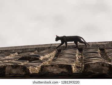 Cat stalking on tiled roof of Tulou at Unesco heritage site near Xiamen