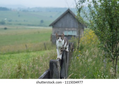 cat standing on tin wooden fence