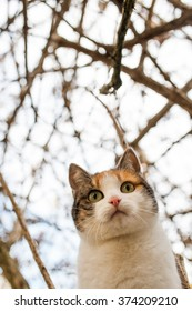A cat is standing on the tree.