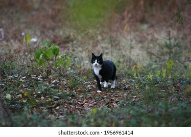 Cat standing one leg up. Cat surrounded by gloomy autumn.
