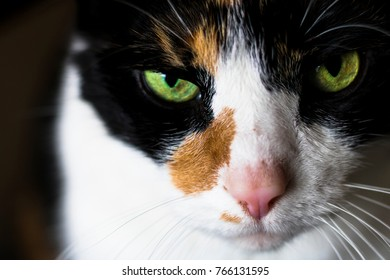 Cat Stares into the Soul