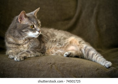 cat staring on the sofa