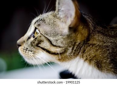cat staring at something