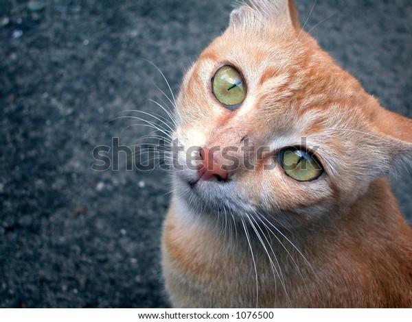 cat starring