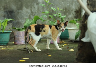 cat starring black and orange patches cat in the philippines
