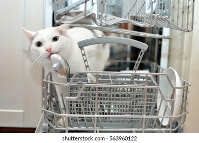 Cat staying in the dishwasher and licking the spoon