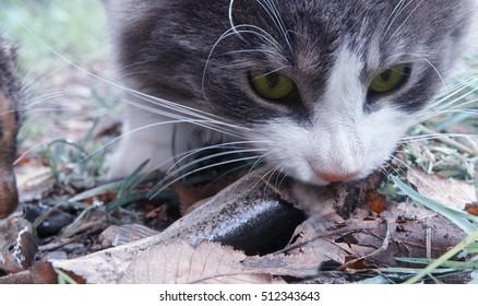 Cat stealing a fish on green grass