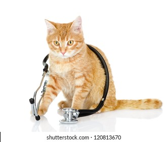 cat with a stethoscope on his neck.looking at camera. isolated on white background
