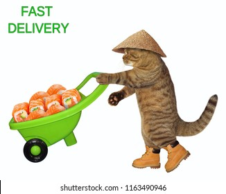 The cat in straw hat  pushes the green wheelbarrow with sushi. White background.