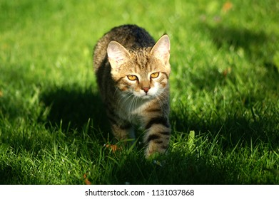 cat straying in the sun in the garden